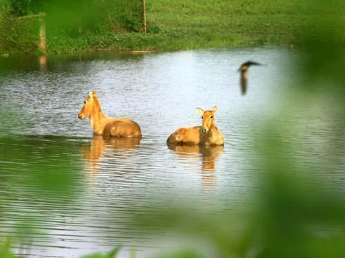 北京大兴野生动物园 - 山东聊城聊之旅国际旅行社有限