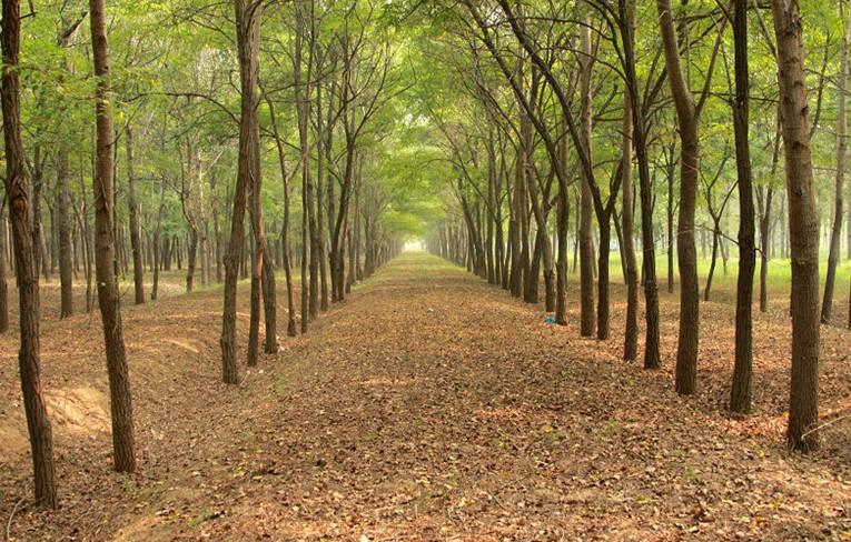 高唐清平森林公园   高唐清平森林公园是在高唐县国营林场的基础上批建的,2003年被评为市级森林公园,2009年晋升为省级森林公园,规划建设面积1038hm2。地理位置优越,交通便利,北距322省道不足3公里,距青银高速公路15公里,连接清平至卅里铺的交通要道清卅公路贯穿其中,行人和游人络绎不绝。   公园属暖温带落叶阔叶林区,野生资源十分丰富,林区主要为人工植被,植被覆被率98%以上,木本植物108种,隶属43科、72属,主要为人工植被。园内以白杨林、杨树林和刺槐林为主要景观,乔、灌、藤、草、动物、