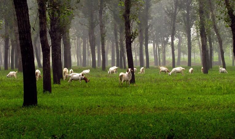 园内以白杨林,杨树林和刺槐林为主要景观,乔,灌,藤,草,动物,微生物