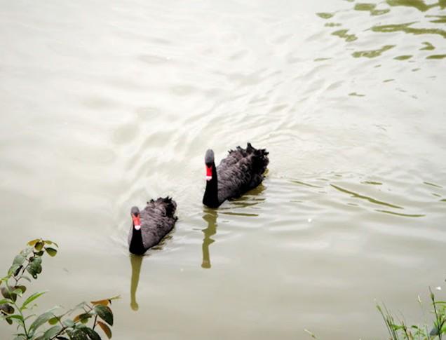 杭州野生动物园 - 山东聊城聊之旅国际旅行社有限