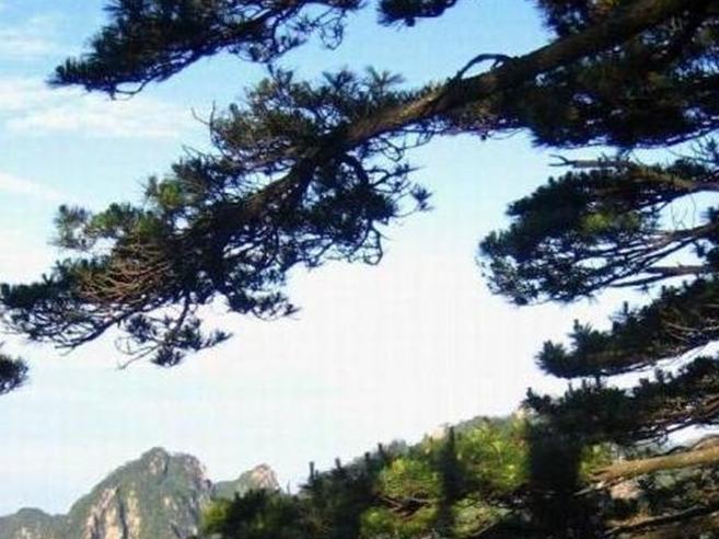 池州大历山风景区 - 山东聊城聊之旅国际旅行社有限