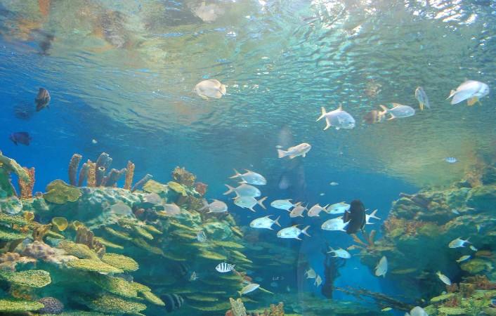 合肥汉海极地海洋世界