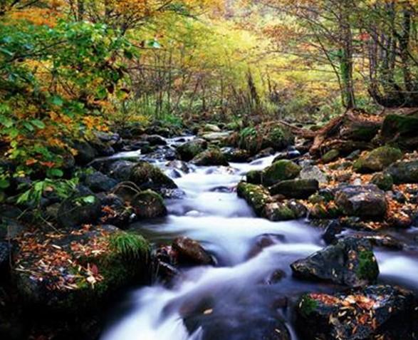 威虎山国家森林公园 威虎山国家森林公园位于海林市境内,园域总面积4147.56平方公里,是以森林和湖光山色自然景观为主,集林业生产、自然保护、旅游娱乐、度假休憩、科 研为一体的现代新型国家级森林公园。区内森林茂密,动植物资源丰富。现有景点近60个,其中人文景点11处、自然景点49处。有省内最大的人工湖--莲花 湖,是享誉全国的《林海雪原》所讲述的故事就发生此。 公园信息 公园名称: 威虎山国家森林公园 所在省市: 龙江森工海林市 公园海拔: 海拔500-1000米 公园面积: 34.