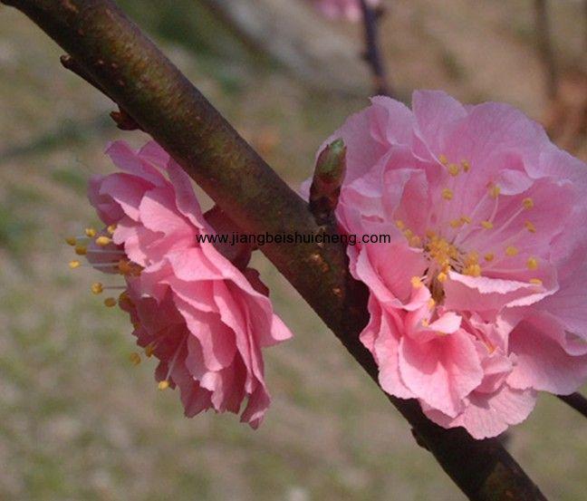 首页 景区大全 湖北省 襄樊市      野花谷自然风景区位于湖北保康县