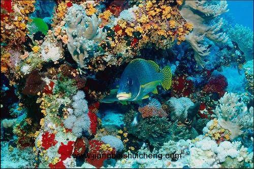 壁纸 海底 海底世界 海洋馆 水族馆 500_334