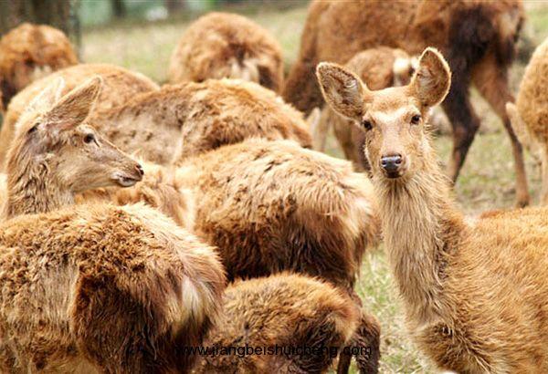 聊城野生动物保护宣传