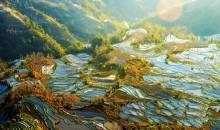 云南元阳梯田+普者黑+碧色寨+罗平油菜花+九龙瀑布+建水古城深度七日游