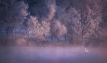 新疆禾木村+喀纳斯湖+赛里木湖+伊宁天鹅泉+奎屯大峡谷+喀赞其错峰八日冬游