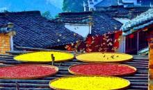 景德镇+婺源秋色+大件瓷器制作+古村晒秋风光人文摄影团七日游
