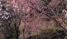 陕西-四川花径寻芳汉中、青木川、药王谷、羌族歌舞晚会、巴拿恰、5.12汶川地震博物馆、西安钟鼓楼七晚八天