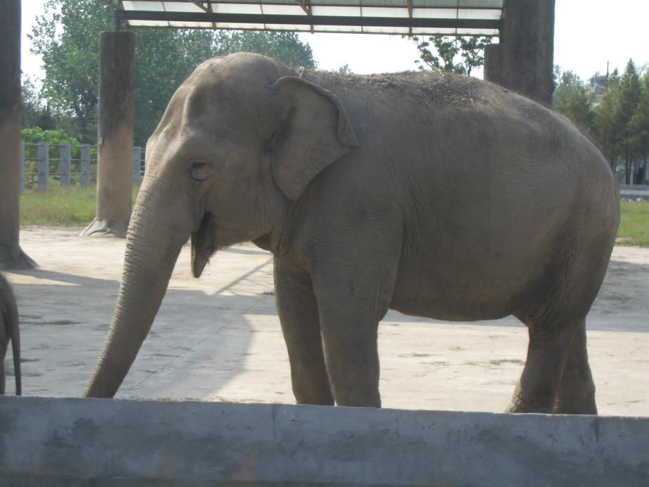 景点大全 野生动物园  上海野生动物园是由上海市人民政府和中国国家