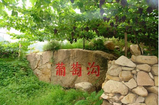 葡萄沟,已经成为昌黎县和秦皇岛市发展生态旅游和观光旅游的一个新的