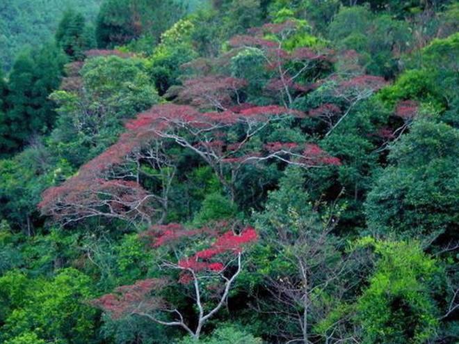 景点大全 名山奇峰  仙人洞自然风景旅游区是一个森林瀑布集中分布区.